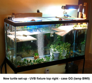 Uv Lighting For Reptiles A New Problem With High Uvb Output Fluorescent Compact Lamps And Tubes
