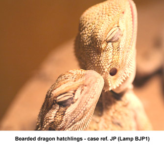 Uv Lighting For Reptiles A New Problem With High Uvb